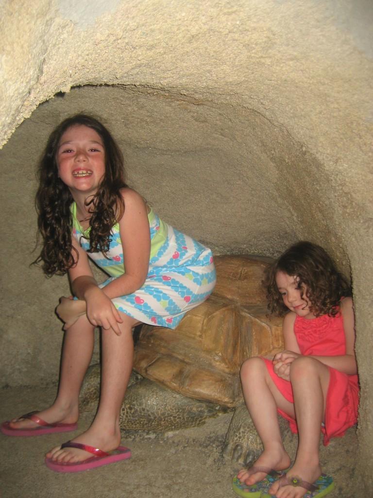 Tortoise Tunnel_BC