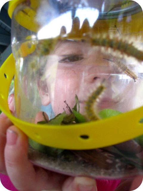 Emma_Caterpillars2