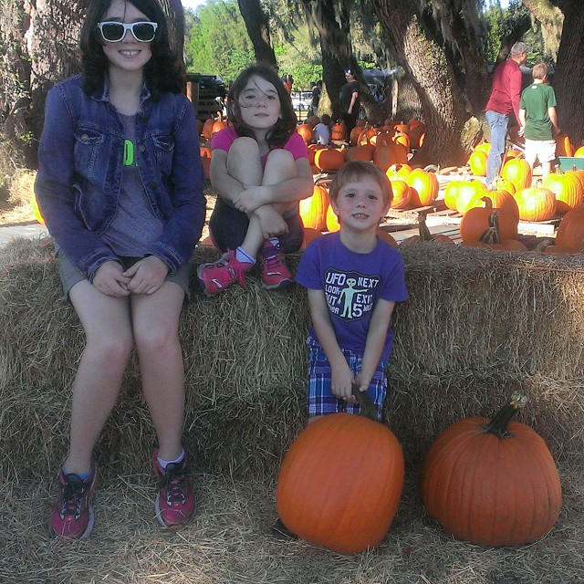 Our visit to #SweetfieldsFarm for the corn maze and fall fun. #Fall #October  #autumn #pumpkins #farm #Florida #TampaBay #smile
