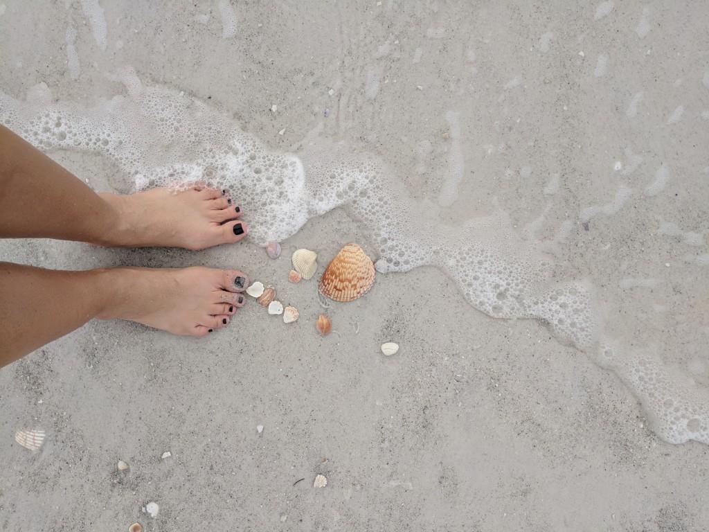 Lido Beach - Shells - Sarasota